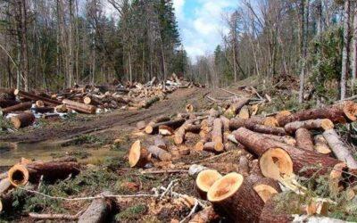 На території парку «Гомільшанські ліси» вирубок протягом 2019 , 2020 року не було