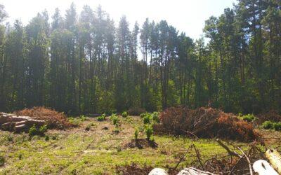 Діяльність лісового господарства включено до планової перевірки