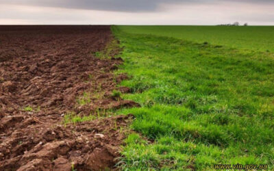 Правозахисники ініціювали порушення кримінального провадження за самовільне використання землі