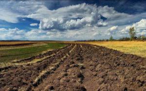Чи не ворог держава українському фермеру?