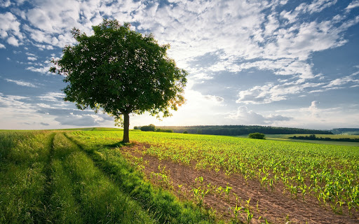 Контролюючим органам повідомлено про можливе порушення використання земель рекреаційного призначення