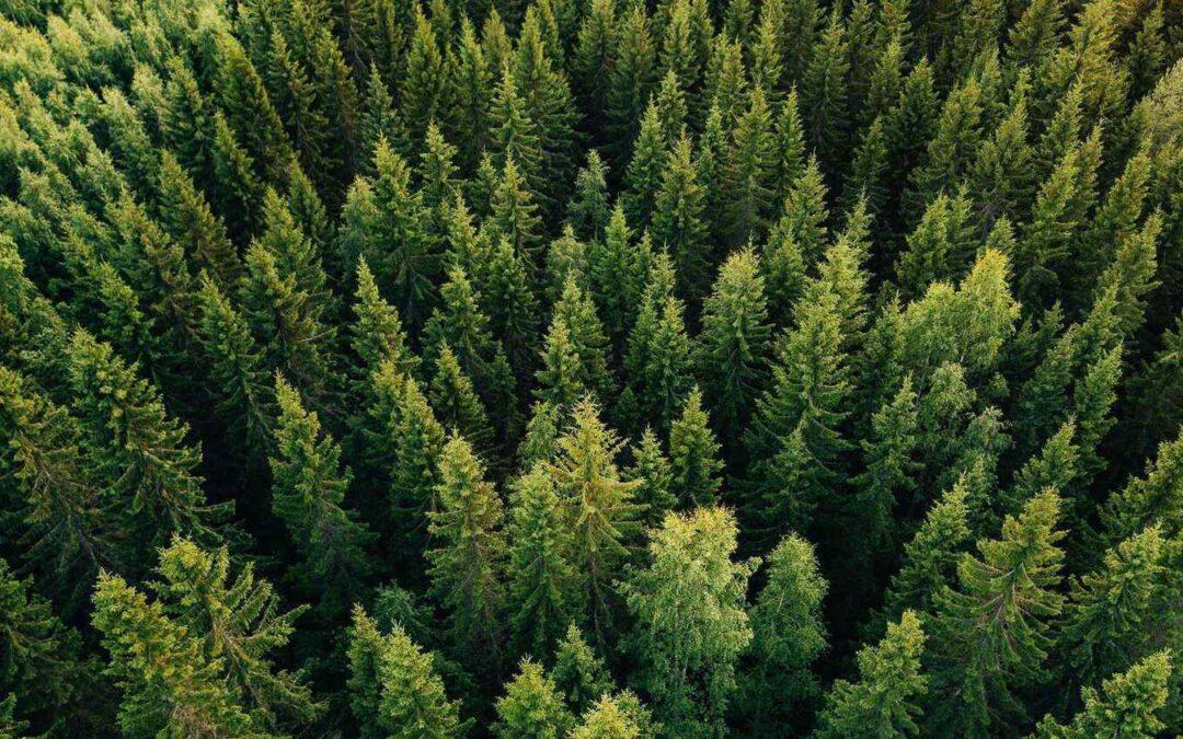 Запросили у всех лесхозов информацию для анализа прозрачности деятельности